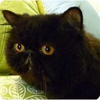 Adopt A Pet :: George - Beverly Hills, CA