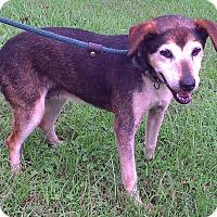 Adopt A Pet :: Fern - Metamora, IN