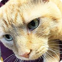 Adopt A Pet :: Crimson - Toledo, OH