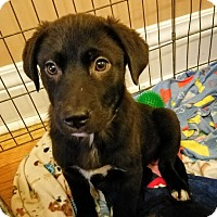 Adopt A Pet :: Felix*ADOPTED!* - Chicago, IL