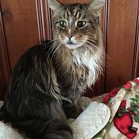 Adopt A Pet :: Sinclair - Absecon, NJ