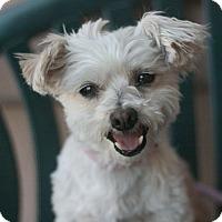 Adopt A Pet :: Benji - Canoga Park, CA