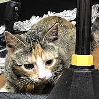 Adopt A Pet :: Krystal - East Windsor, NJ