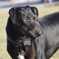 Adopt A Pet :: Woodford - West Allis, WI