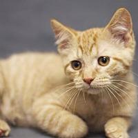 Adopt A Pet :: Teddy - Sioux Falls, SD