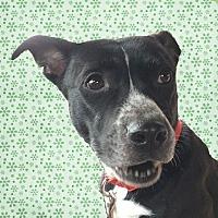 Adopt A Pet :: Selma - Cincinnati, OH