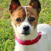 Adopt A Pet :: Kelso - Elkhorn, WI