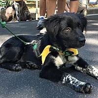 Adopt A Pet :: Bandit - Alpharetta, GA