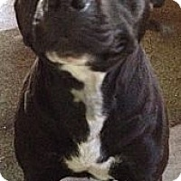 Adopt A Pet :: Sweetie! (Courtesy Post) - Leesport, PA