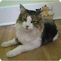 Adopt A Pet :: Romeo (video) - Portland, OR