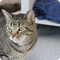 Adopt A Pet :: troy - El Cajon, CA