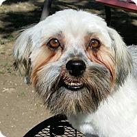 Adopt A Pet :: Gizmo - Southeastern, KS