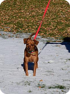 Miniature Pinscher/Dachshund Mix Dog for adoption in Gardnerville, Nevada - Trina