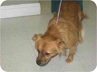 Tibetan Terrier Mix Dog for adoption in Lavon, Texas - Lexy