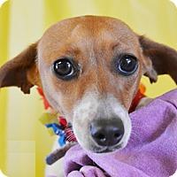 Adopt A Pet :: Reesie - Littlerock, CA