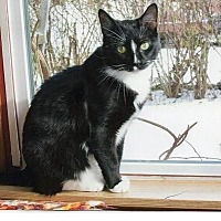 Adopt A Pet :: OLIVER - Laid Back Sweetie - Rochester, NY