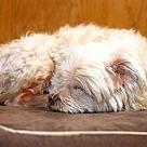 Adopt A Pet :: jeri