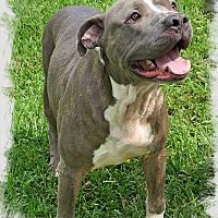 Adopt A Pet :: Hippo - Conroe, TX