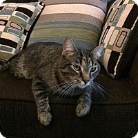 Adopt A Pet :: Andy - Burlington, NC