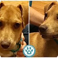 Adopt A Pet :: Bitly - Kimberton, PA