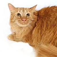 Adopt A Pet :: Melanie - Alpharetta, GA