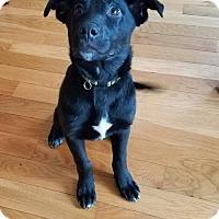 Adopt A Pet :: Leo - Albertville, MN