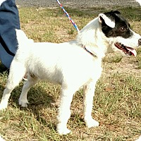 Adopt A Pet :: Cody in College Station, TX - Houston, TX
