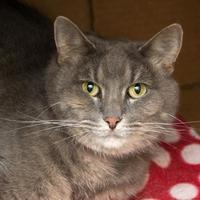Adopt A Pet :: Ellie - Maumee, OH
