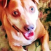 Adopt A Pet :: Heff - San Diego, CA