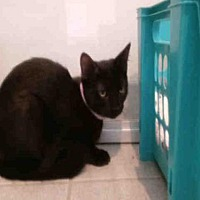 Adopt A Pet :: UNO - Canfield, OH