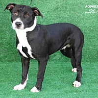 Adopt A Pet :: MOLLY - Hanford, CA