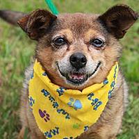 Adopt A Pet :: LADY - Clayton, NJ