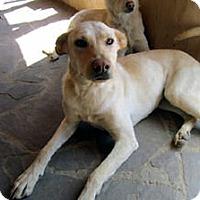 Adopt A Pet :: Journey - Santa Fe, NM