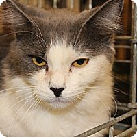 Adopt A Pet :: Hope 2 c - Santa Monica, CA