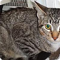 Adopt A Pet :: Alonso - Escondido, CA
