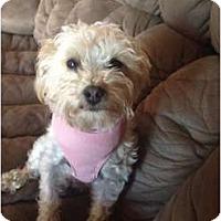 Adopt A Pet :: Stella - Oceanside, CA