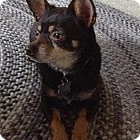 Adopt A Pet :: JB - Mt Gretna, PA