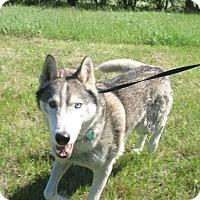 Adopt A Pet :: Prozac - Egremont, AB