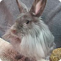 Adopt A Pet :: Malia - Newport, DE