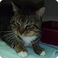 Adopt A Pet :: Silas - Hamburg, NY
