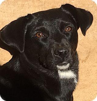 Dachshund Mix Dog for adoption in Staunton, Virginia - Suzie