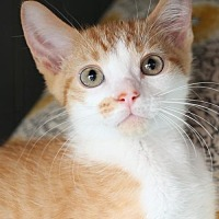 Adopt A Pet :: Brendan  Male - Knoxville, TN