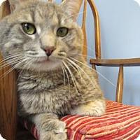 Adopt A Pet :: Hercules - Northfield, MN