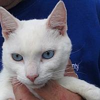 Adopt A Pet :: Irish - Germantown, MD