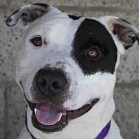 Adopt A Pet :: AXEL - Lompoc, CA