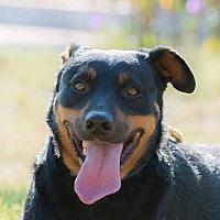 Adopt A Pet :: DIMITRY - Corona, CA