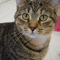Adopt A Pet :: Millie -- $75 - HOLD ME, PLAY WITH ME - Hillside, IL