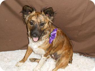 Cattle Dog Mix Dog for adoption in Lockhart, Texas - Paisley