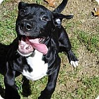 Adopt A Pet :: Zeke-Reduced Adoption $75 - Bel Air, MD