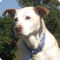 Adopt A Pet :: Gentle, quiet Tasha - Baltimore, MD